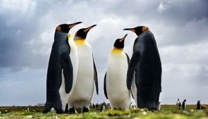 5 Penguins